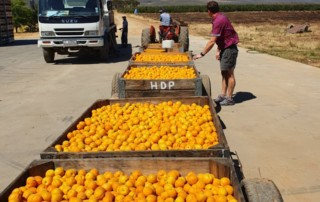 Our services includes overseeing the harvesting & transporting of fruit