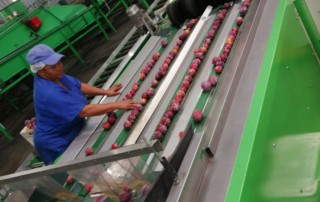 Our services include overseeing the sorting and packing and packing of fruit