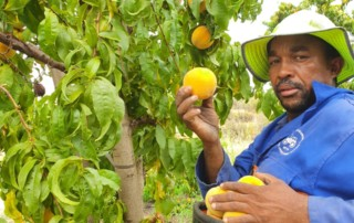 Cape Fresh Produce services include quality control every step of the way